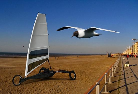 albatros 1
