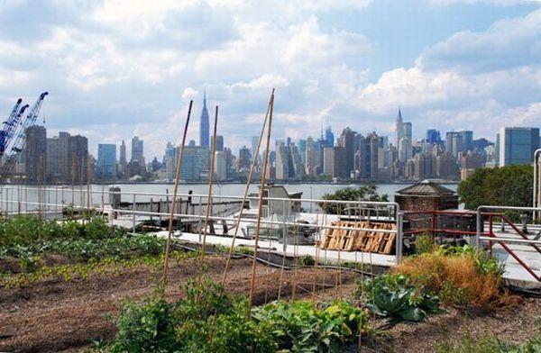 brooklyns eagle street rooftop farm