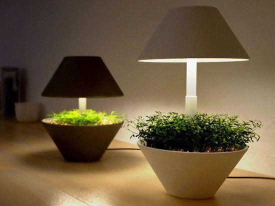 lightpot 1