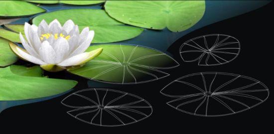 lotus garden 7
