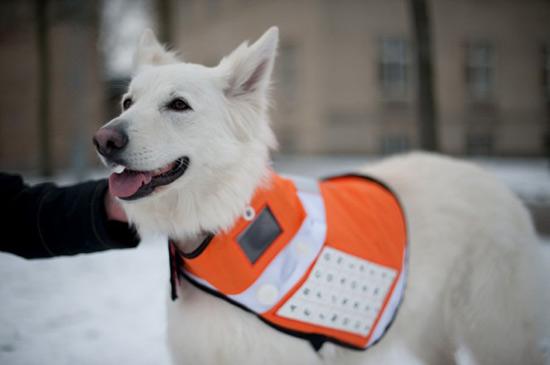 messenger dog 01