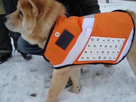 messenger dog 04