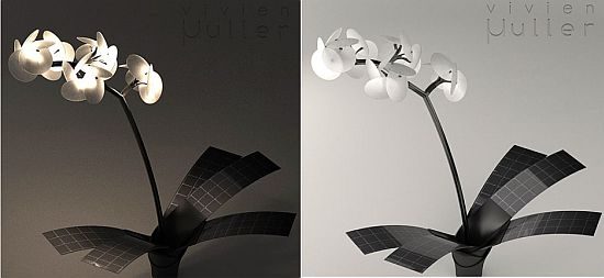 orchid lamp 6