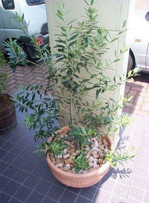 plant 3821