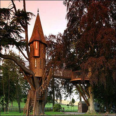 tree house 2 1451