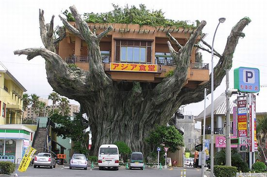 treehouse restaurant 1