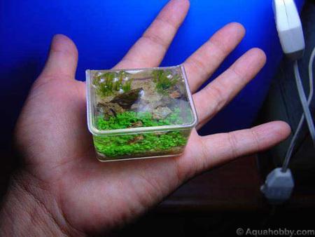 World's smallest aquarium - Designbuzz