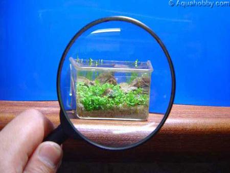 worlds smallest aquarium2