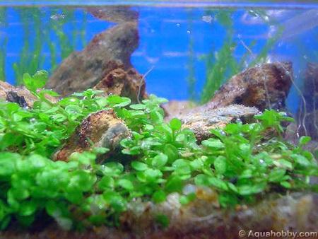worlds smallest aquarium3