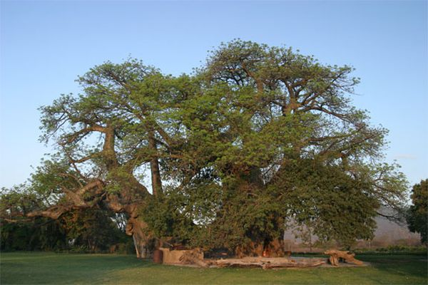 baobab-bar-4
