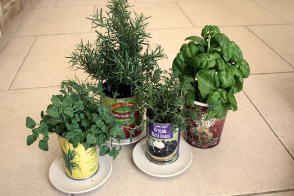 organicpottedplants
