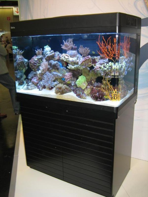 red-sea-max-2501