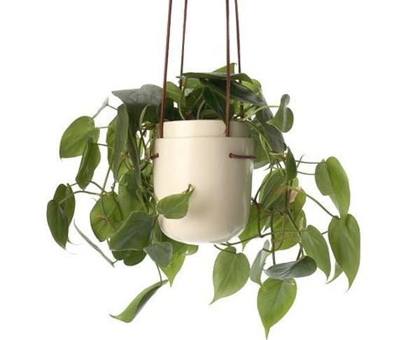 060209 hanging planter