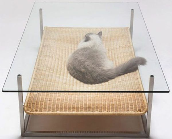 cat-friendly-coffee-table