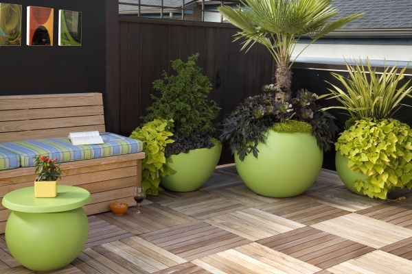 naturally grown plants in outdoors