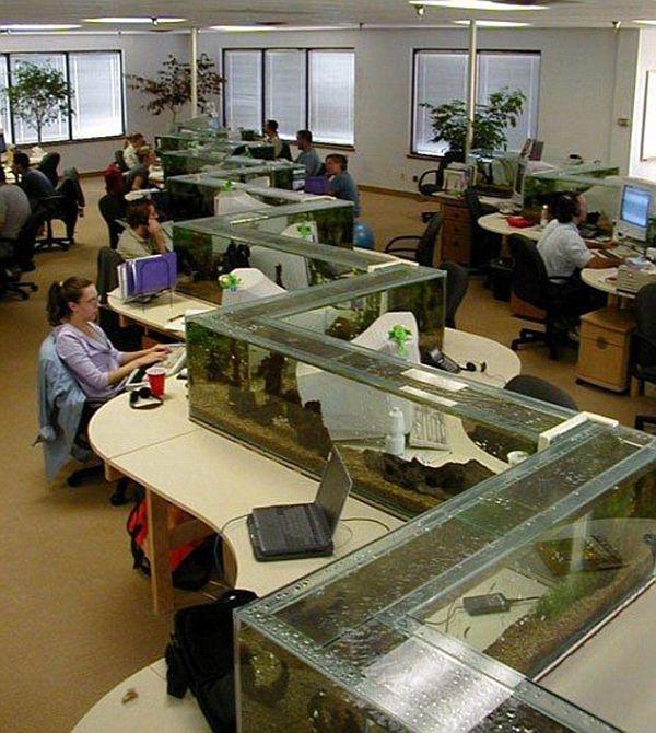 Aquarium Zigzag Divider