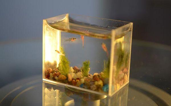 Small Fry – the tiny fish tank_1