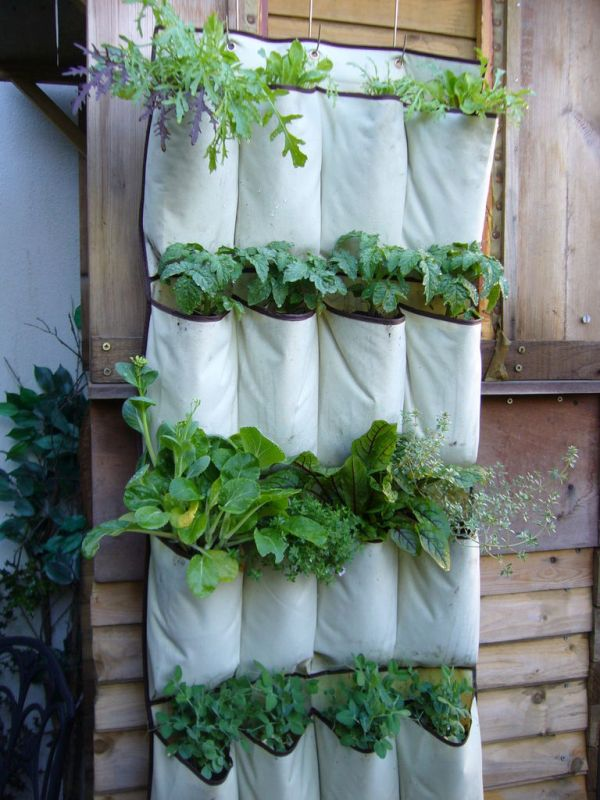 Cloth packets for Vertical garden