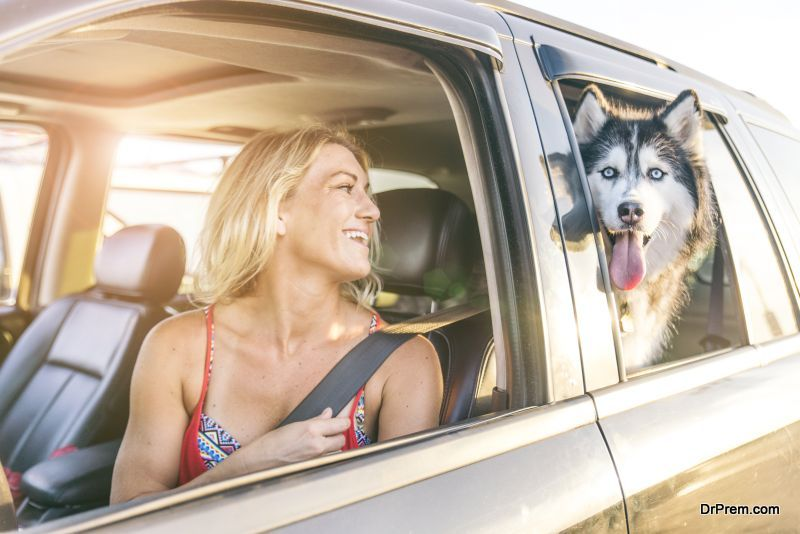 Automobile ideas for pet moms and dads