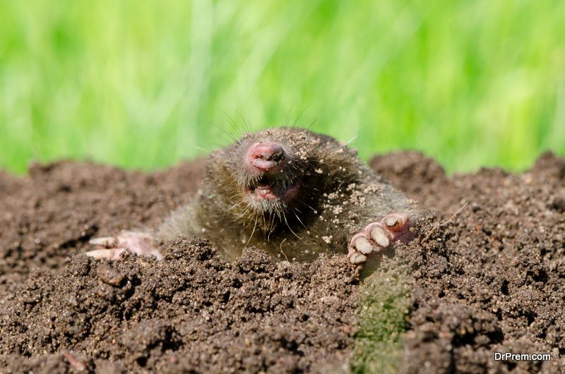 Controlling-Pest-In-Your-Yard.