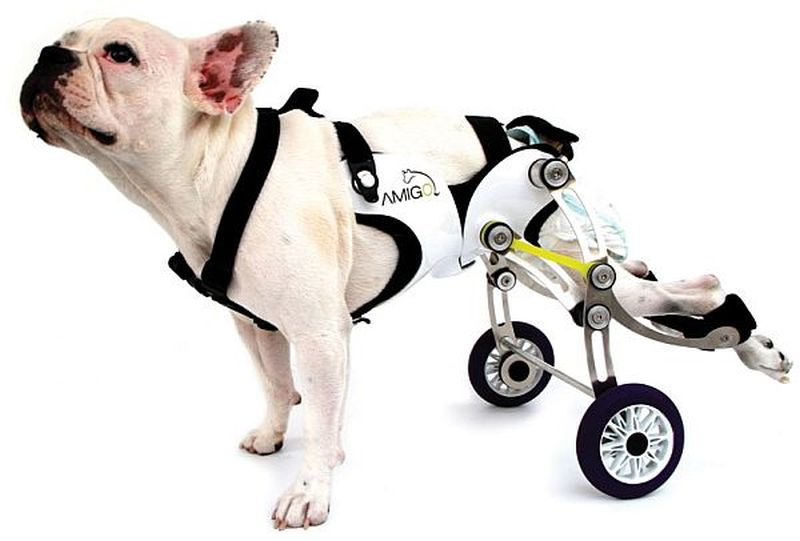 Amigo - The best wheelchair for your canine friend