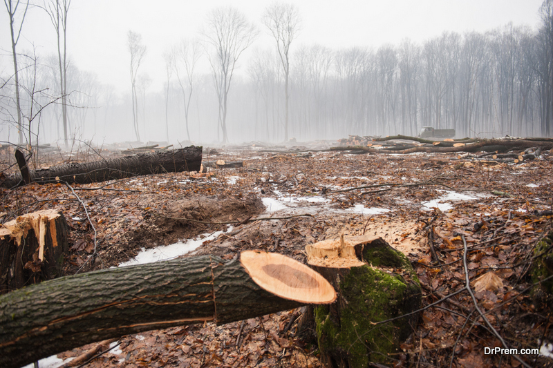 Billions of trees have been cut down