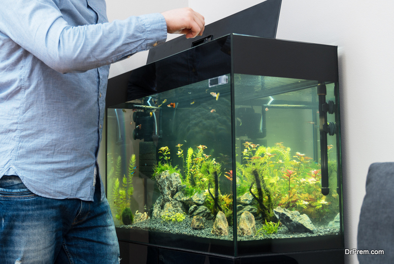 Feeding Your Fish While You're Away