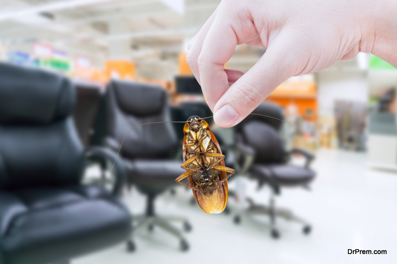 pest type affecting your business